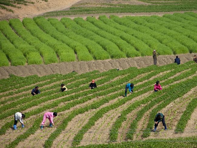 Kinder arbeitem im Feld